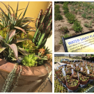 Disneyland Resort Receives Meridian Horticulture Award